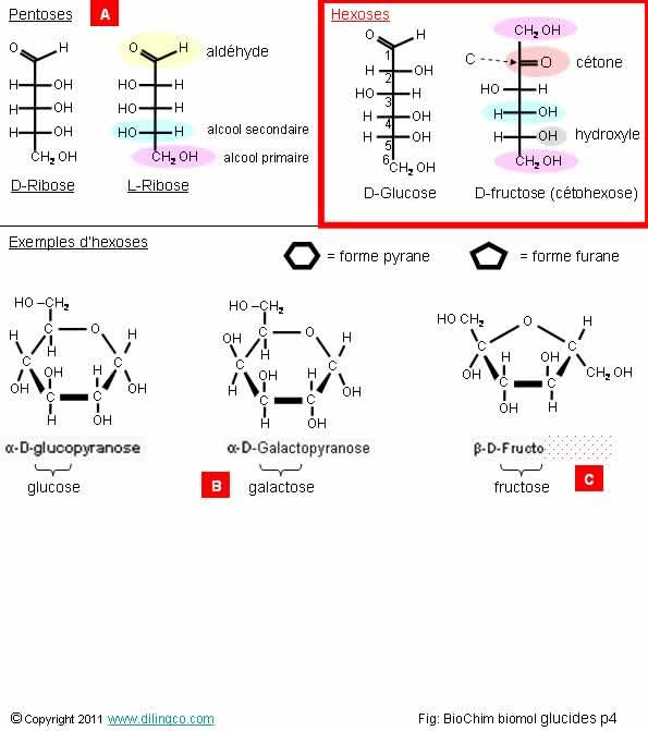 L Fructopyranose WEB Links bc2_1